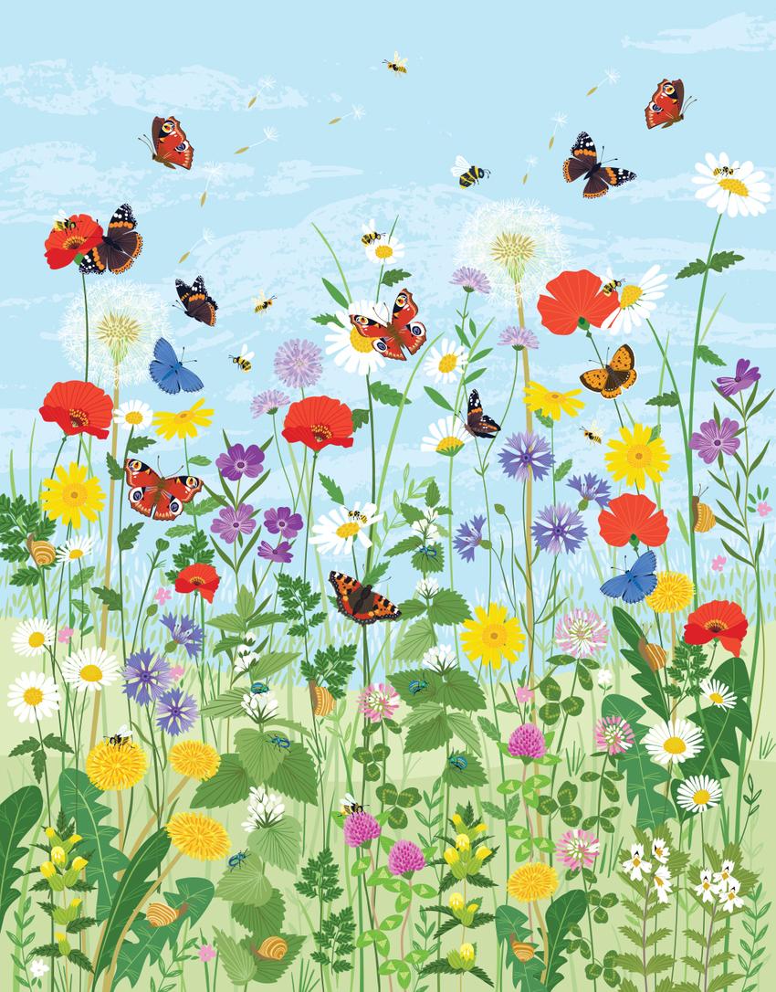 BethanJanine_Book_Flower_Meadow_Butterflies.jpg
