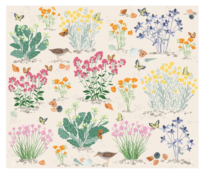BethanJanine_Book_Seashore_Plants_Nature.jpg