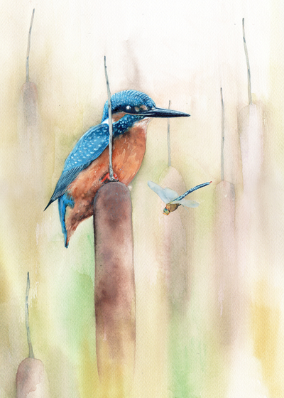 kingfisher-and-dragonfly-jpg