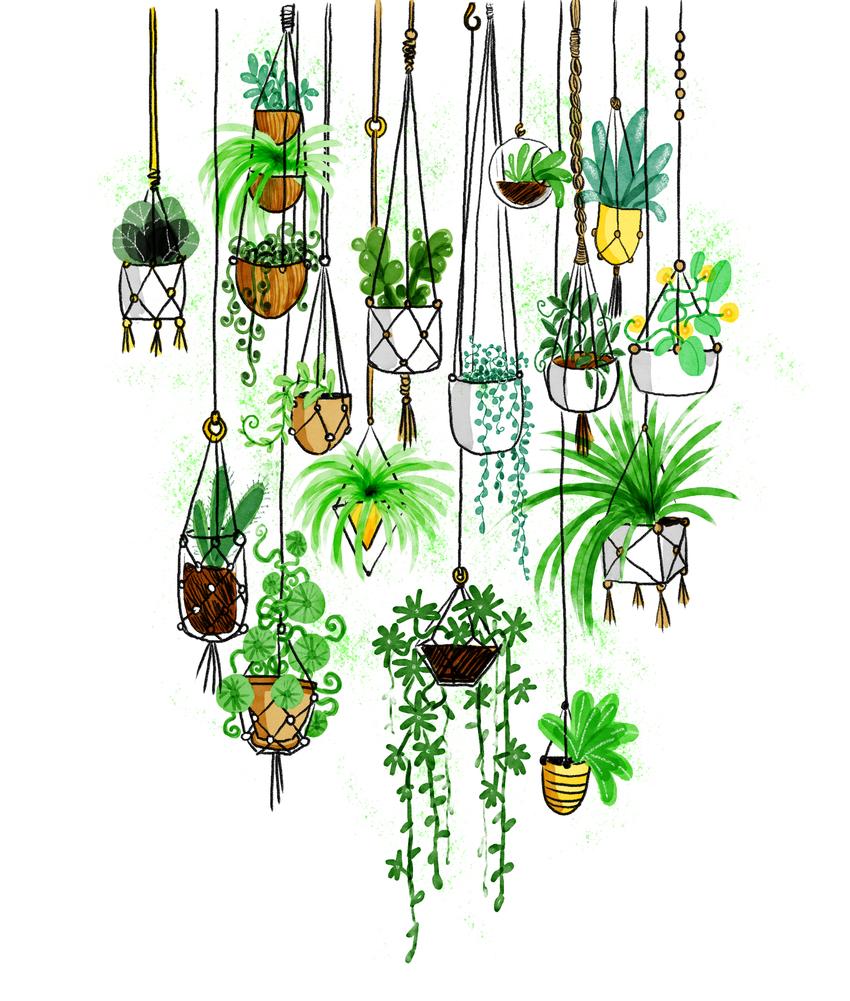 2017-Green-Hangingplants.jpg