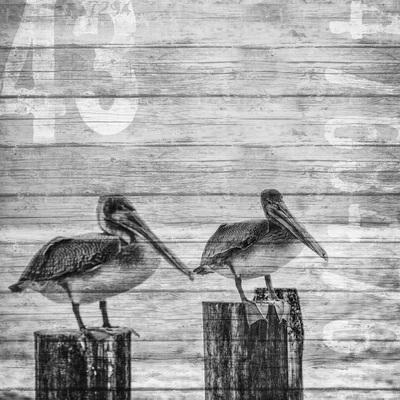 seabirds-11-13-035-jpg