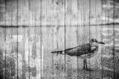 seabirds-11-13-038-jpg-1