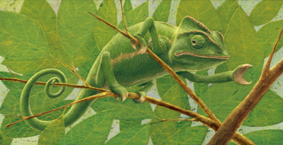 chameleonlr-png