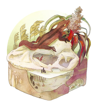 02-habitat-animal-nature-skull-zoology-science-geco-plants-lizard-jpg