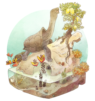 02-habitat-animal-nature-skull-zoology-science-island-turtle-lemon-tree-treasure-jpg