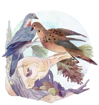 02-habitat-animal-nature-skull-zoology-science-pidgeon-dove-pinecone-nuts-jpg