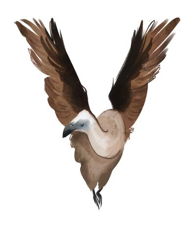 animal-alphabet-letter-v-vulture-capital-jpg