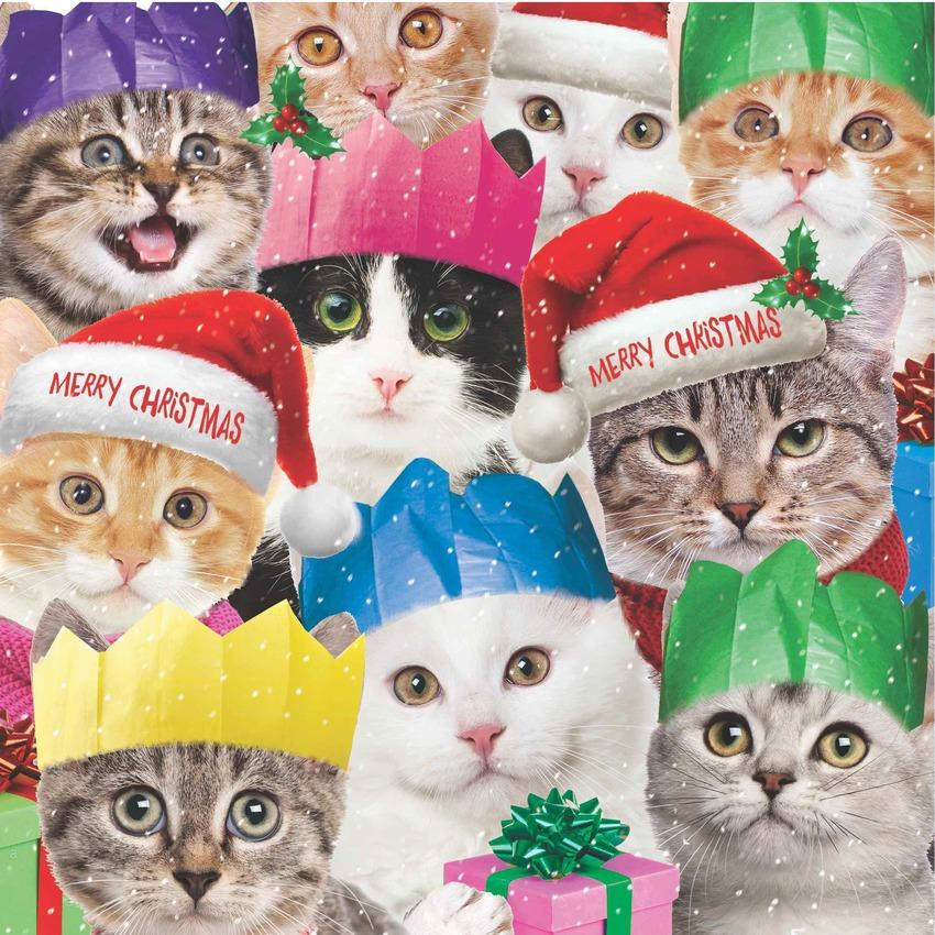 hwood cats xmas.jpg