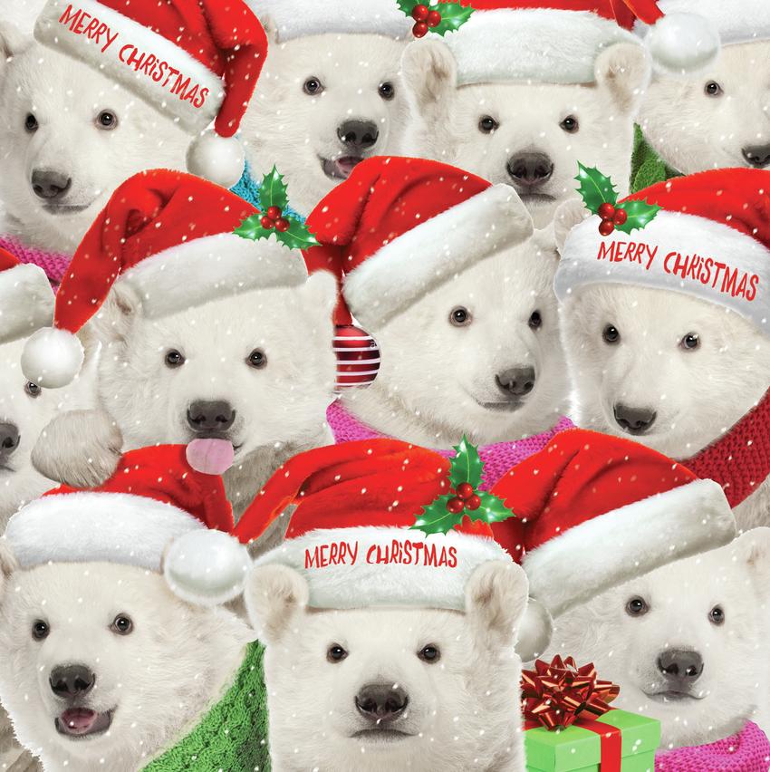 hwood polar bears card.jpg