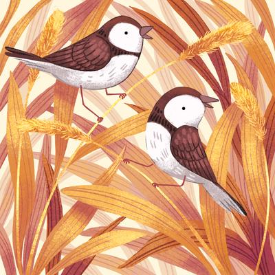 birds-grass-outdoors-animals-jpg