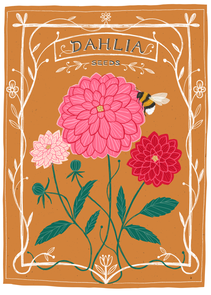 BethanJanine_Seeds_Flowers_Dahlia.jpg