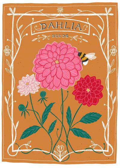 bethanjanine-seeds-flowers-dahlia-jpg