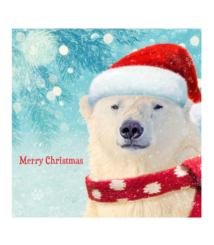hwood polar bear card.jpg
