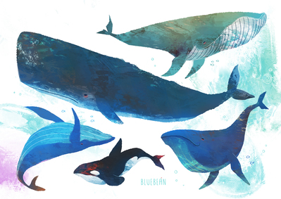 whales-collection-jpg