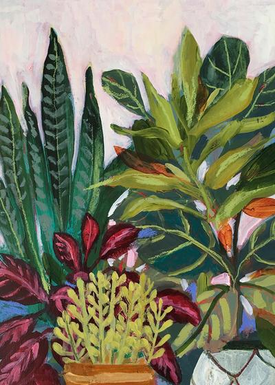 montgomery-plantophile-houseplants-jpg