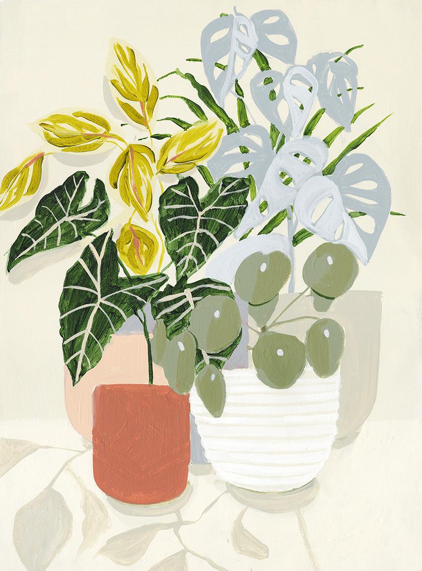 SMO_houseplants_terracotta_pot.jpg