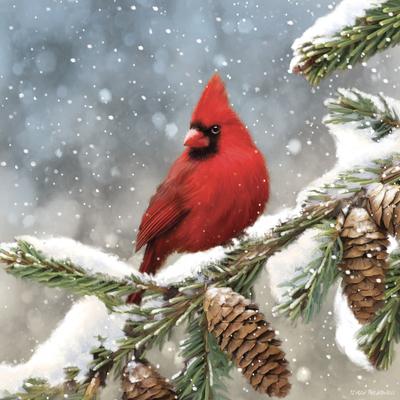 st849-red-cardinal-jpg-1