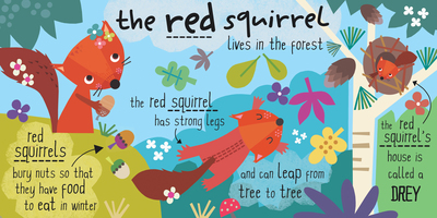 jayne-schofield-red-squirrels-jpg