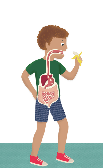 human-body-digestive-system-jpg