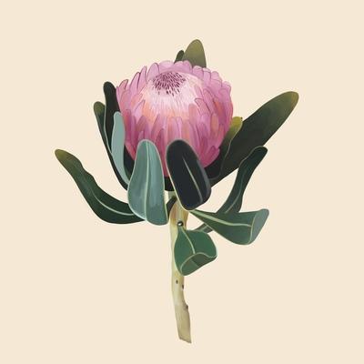 protea-flower-jpg