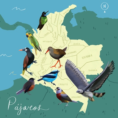 map-birds-sea-colombia-jpg