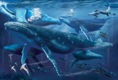 humpbacks-jpg
