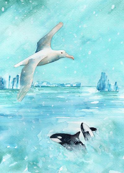 albatross-and-orca-low-res-jpg