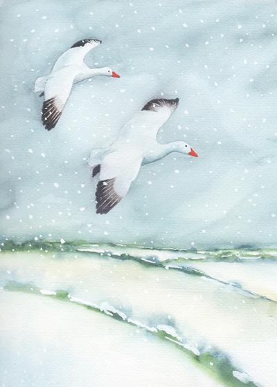 snow-geese-lres-jpg