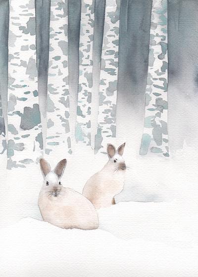 snowshoe-hare-lres-jpg
