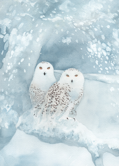snowy-owl-pair-snow-xmas-jpg