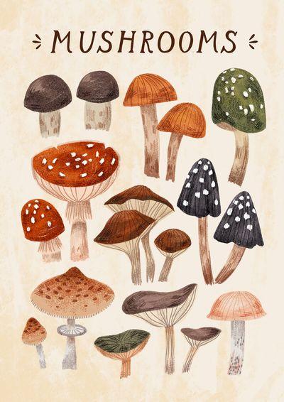 mushrooms-fungi-botanical-colorful-poster-nature-jpg