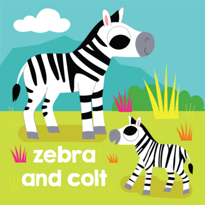 zebra-and-colt-baby-cute