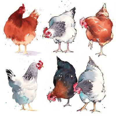hen-studies-jpg