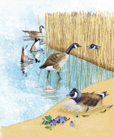 gerbert-goose