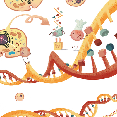 dna-recipe-biology-cell