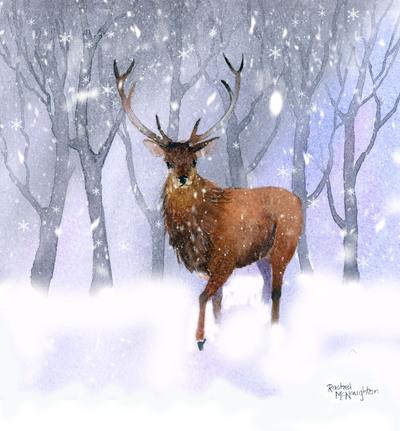 snowy-stag-jpg
