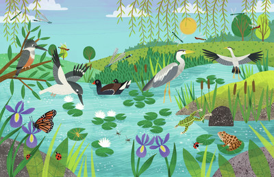 summer-pond-jpg