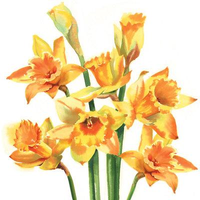 spring-daffodils-jpg
