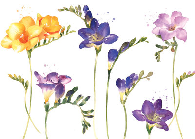 spring-freesias-jpg