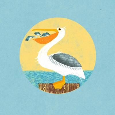 pelican-jpg-1