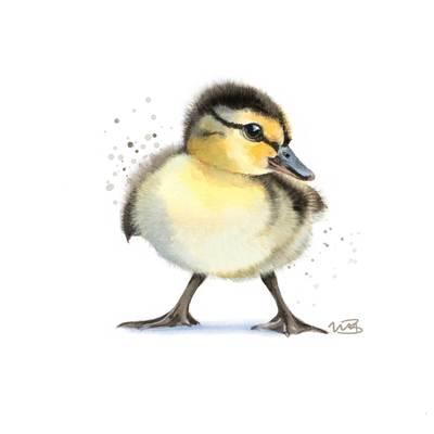 duckling-jpg