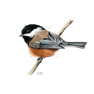 chickadee-jpg