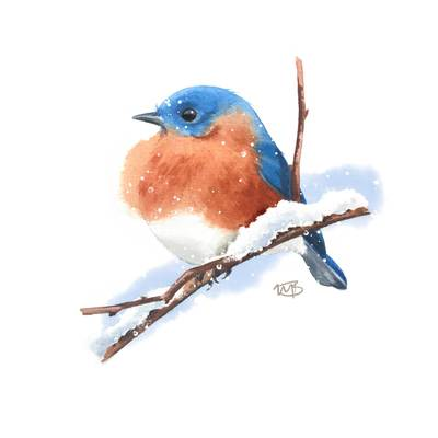 bluebird-jpg
