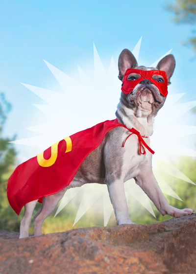 hwood-super-dog-jpg
