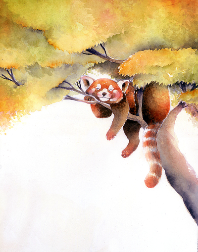 panda-rosso-jpg