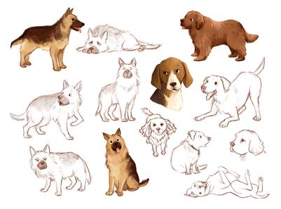 dogs-breeds-jpg