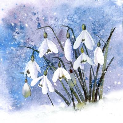 christmas-snowdrops-jpg