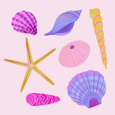 seashells-pattern-png
