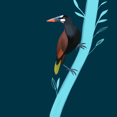 bird-tree-jpg