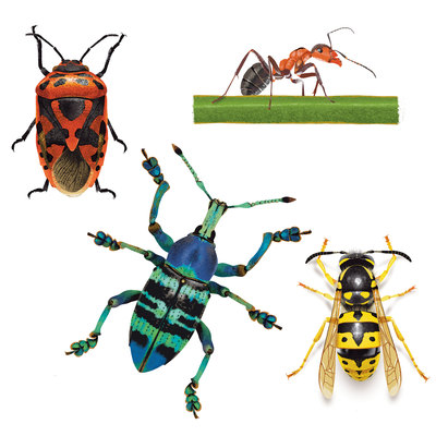 insect-studies-jpg